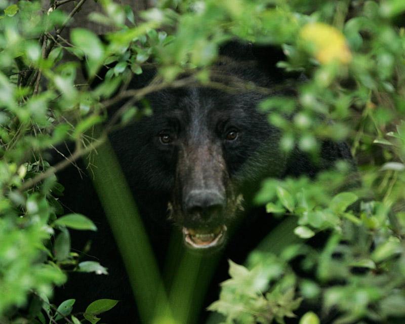 Omnivores Natureworks