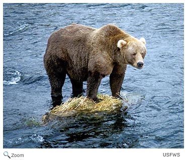 Ursidae Bears Wildlife Journal Junior