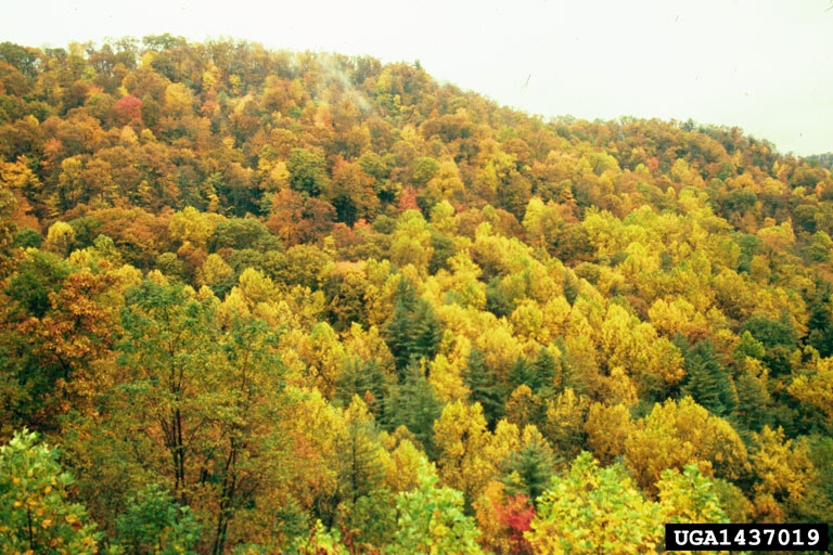 characteristics of tropical deciduous forest