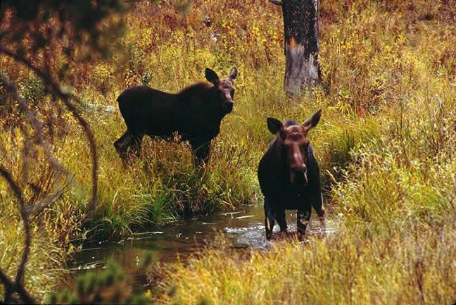 Home Range | Wildlife Journal Junior