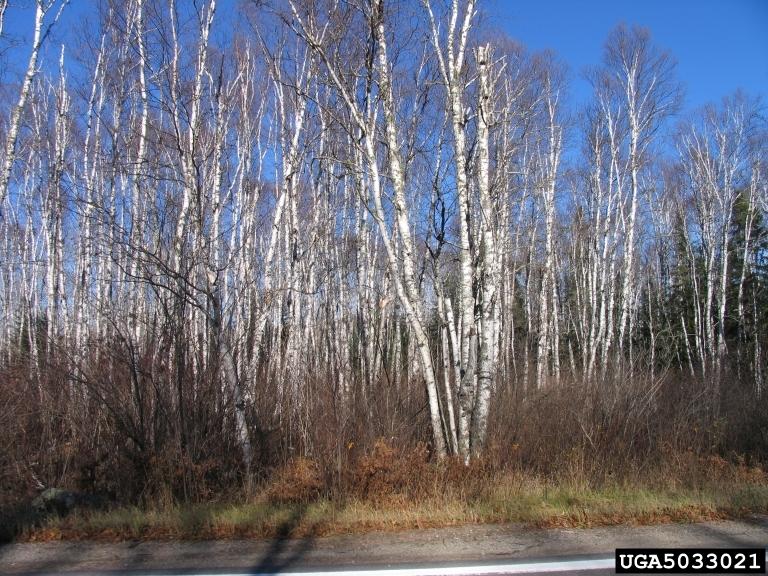 Temperate Deciduous Forests Natureworks