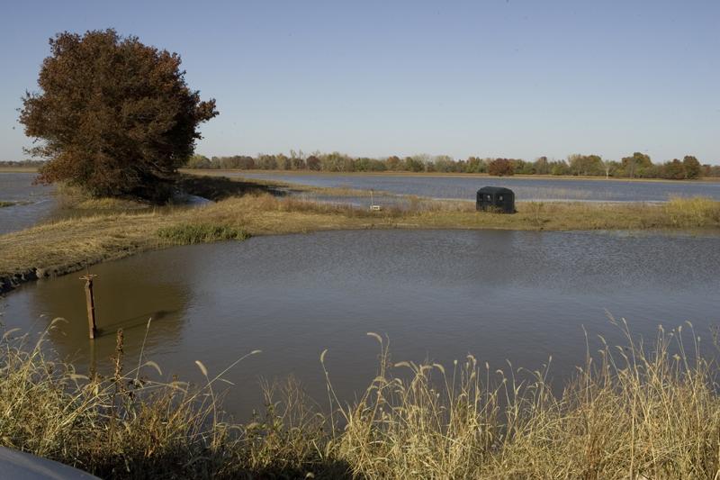 Ponds Natureworks