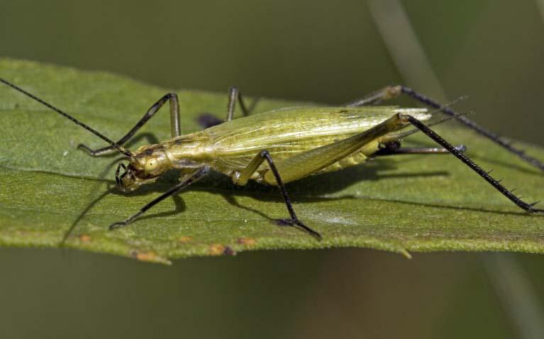 Arthropoda - crustaceans, insects   Wildlife Journal Junior