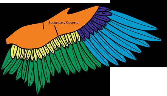 bird identification wildlife journal junior
