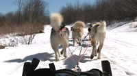 Dogsledding in the Northern Wilderness